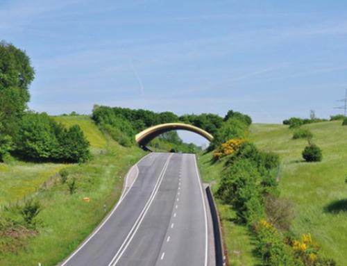 Puentes y túneles exclusivamente para animales